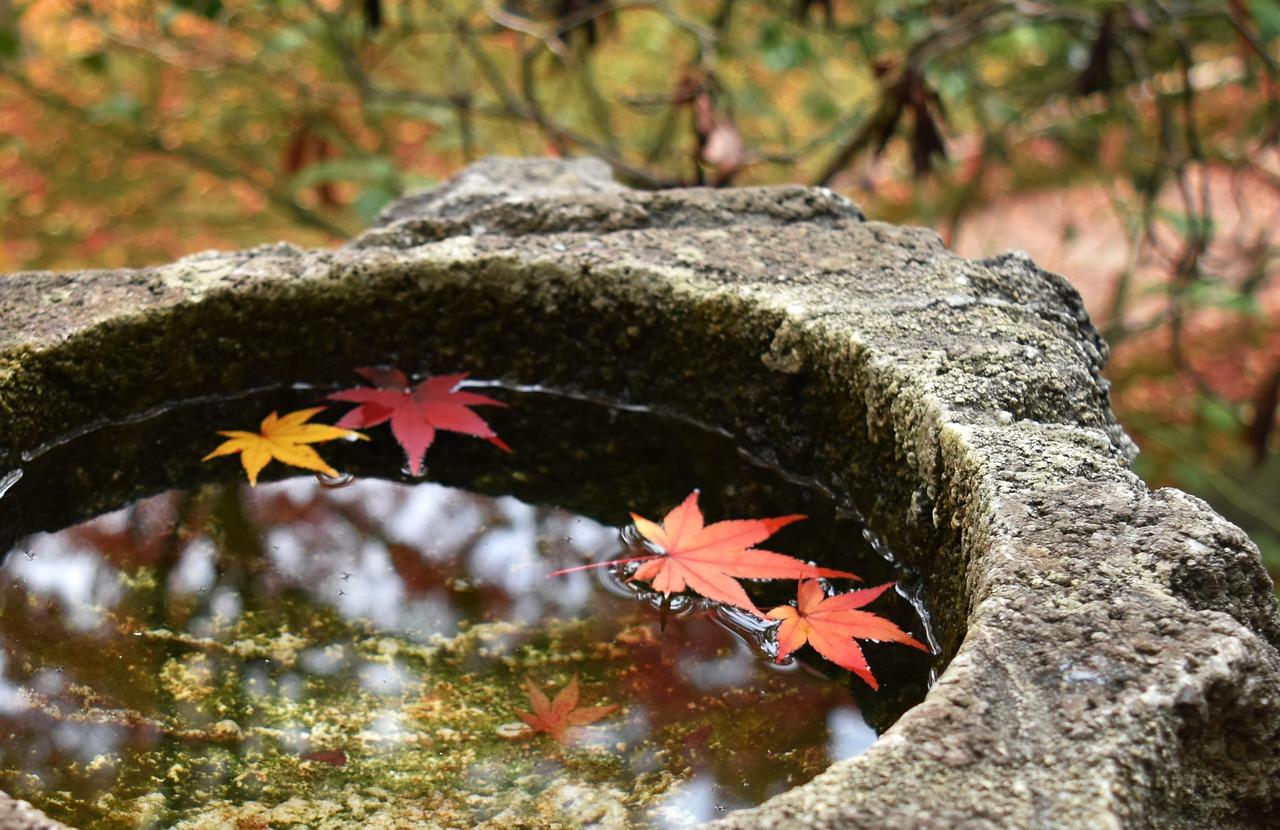 京都 桂川 シネマ イオン